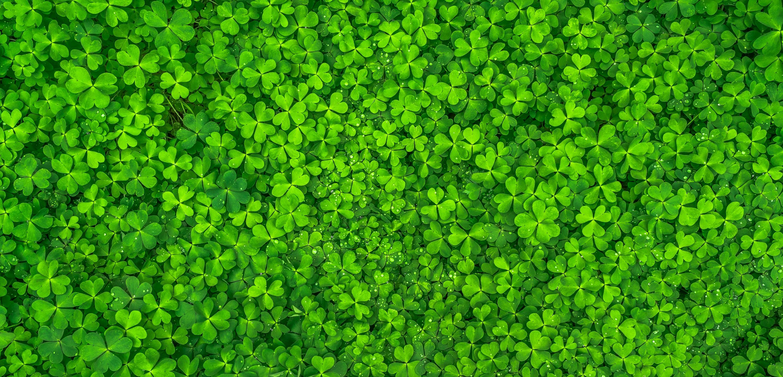 leaf-nature-green-spring-158780